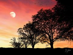 Evening Skies (domwlive) Tags: digitalart spring topazlabs blackwhite moon landscapes adobephotoshop trees digitalimages castleeden skies digitalpainting april countydurham monotone northeastengland branches impressionism england unitedkingdom gb