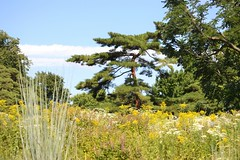 Native Plant Garden (KaDeWeGirl) Tags: newyorkcity bronx botanical garden nybg pine trees green