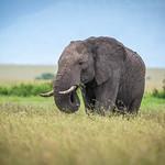 Mara Elephant thumbnail