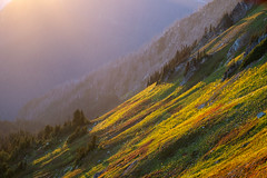 Evening glow. Red Pass (Laura Jacobsen) Tags: fallcolor fog glacierpeakwilderness hiking meadow mountains slope sunset washington wilderness