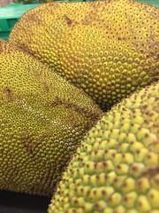 Jackfruit (joncutrer) Tags: ingredients cooking grocerystore vegetables food edible groceries produce royaltyfree cc0 fruit artocarpus heterophyllus tropical