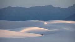 Shifting Sands (gseloff) Tags: gypsum sand mountains cactus desert whitesandsnationalmonument nature landscape shadows newmexico gseloff