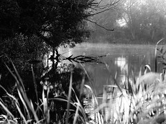 water (Darek Drapala) Tags: bw blackwhite blackandwhite water waterscape waterreflects mirror nature lumix light legnica panasonic poland polska panasonicg5 trees
