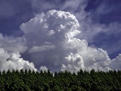 Thunder promised (Tony Tomlin) Tags: whiterockbc britishcolumbia canada clouds cumulus sky