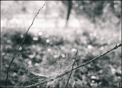 * (PattyK.) Tags: nature ioannina epirus ipiros balkans hellas ellada greece grecia griechenland monochrome ελλάδα ιωάννινα ήπειροσ φύση snapseed