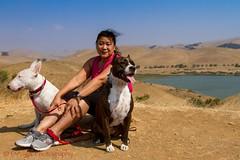 LaborDayDogWalk-0037 (DJ Anto D) Tags: englishbullterrier pitbullmix beniciaca lakeherman vallejo california