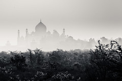 Wonder in winters (ShikharF8) Tags: shikharf8in shikharf8 shikharsharmaphotography shikharsharma tajmahal taj agra india winters wintermorning monotone wonder outdoor blackandwhite bw