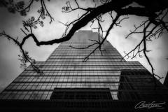 Montreal City (corineouellet) Tags: cityscape city mirror reflection architecture building travel noiretblanc blackandwhite bnw canada québec montréal canoncanada canon canonshot canonphoto