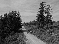 hikers in the Northern Black Forest (4) (mgheiss) Tags: wanderer schwarzwald schwarzweis bw monochrom sony rx100 schliffkopf blackforest weg