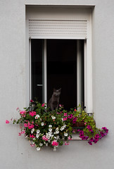 Framed kitty (Pixilated Planet) Tags: cat flowers frame nature travel window sunrise france nantes