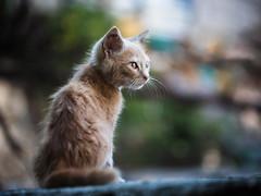 Street cat 209 (Igor A.T.) Tags: cat cats кот кошка котка kedi feline kat katze katzen kot kotka pet felino kottur katte kass kitty gato kocka gatta katzchen 5d 100mm котёнок кiт кошеня kitten kätzchen canon streetcat