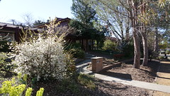 gate blossom (spelio) Tags: mal mj home old house sep 2018 belconnen act canberra australia