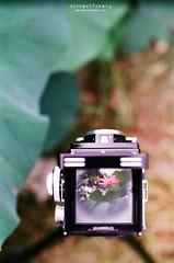 抓住夏天尾巴 ([M!chael]) Tags: nikon f3hp nikkor 5014 ai fujifilm superia400 film manual taiwan chiayi flower rolleiflex xtra400