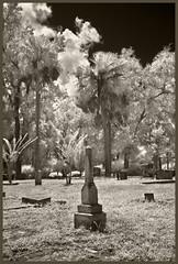 Oakdale Cemetery #4 IR 2018; Odd Stone (hamsiksa) Tags: blackwhite infrared digitalinfrared infraredphotography cemeteries graveyards burials graves tombstones gravemarkers funeraryhorticulture oaks liveoaks laureloak wateroak quercus spanishmoss tillandsiausenoides quercusvirginiana sabalpalmetto florida centralflorida deland volusiacounty