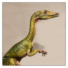 Musée Miniature et Cinéma (Laetitia.p_lyon) Tags: fujifilmxt2 musée museum miniatureetcinéma jurassicpark procompsognathus dinosaure lyon danohlmann