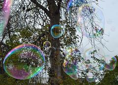 bubbles in the park (conall..) Tags: soap bubbles autumnfair honeyshow belfast botanic park southbelfast northernireland refraction colour spectra