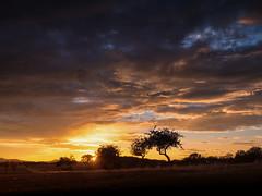 Last Summer Sunset (derhalbling) Tags: derhalbling staufenberg niedersachsen kassel himmel sky sunset sonnenuntergang wolke cloud outdoor abend abendstimmung evening tree baum road