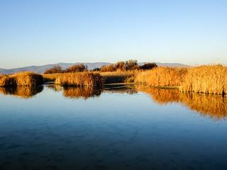 Masiega y observatorio de fauna Parque Nacional de las Tablas de Daimiel Ciudad Real 08