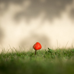 Fraise des champs (hdenis35) Tags: fraise jardin proxy suréalisme strawberry garden 52in2018