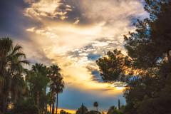 Tucson, Arizona (Amazing Aperture Photography) Tags: sunset sunrise nature outside outdoors sky clouds light lighting trees foliage plants palmtrees pinetrees beautiful twilight arizona tucson blue orange sun nikon nikond800