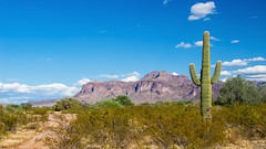 #Arizona as seen by #ArturoNahum (Arturo Nahum) Tags: arturonahum arizona desert desierto usa landscape 600