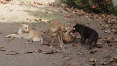 Don't take on me, not yet, fat fart dog. (Artur Marinho) Tags: sony sonynexf3 dog cachorro vidadecahorro