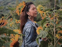 (Aljay Belleza) Tags: sunflower flowers art iphone8plus iphone asia travel sun summer philippines photography