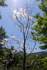 Web wormed tree (MarksPhotoTravels) Tags: bluewallpreserve greenvillecounty southcarolina