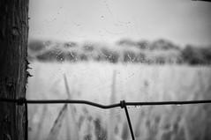 Chandelier (Infrakrasnyy) Tags: infrared ir 093 sony nex 5n converted camera full spectrum deep black white monochrome bw ireland sligo erie strandhill