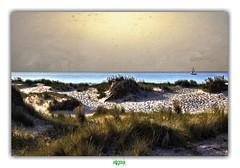 NAVIGATION (régisa) Tags: dune oyat sans sable diguedubreak dunkirk dunkerque voilier sailing boat