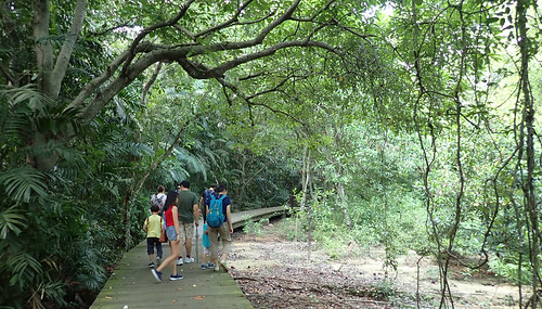 Pasir Ris mangrove boardwalk tour with the Naked Hermit Crabs, Sep 2018
