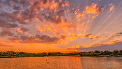 Dreamy sunset (jchmfoto.com) Tags: pinksky lake sky madrid landscape europe sunset spain anochecer cielo cielorosa cielorosado crepúsculo dusk españa europa evening lago landscapes nightfall noche ocaso paisaje paisajes puestadesol puestadelsol sundown twilight leganés es
