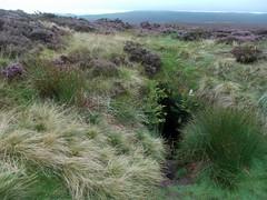 Cateran Hole (sylvia.humphrey) Tags: cave heather moor northumberland