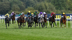 All the runners in the 2017 St Leger (Steve Barowik) Tags: doncaster races southyorkshire racecourse townmoor grandstand horse jockey trainer groom saddle plate whip stevebarowik barowik nikond500 70200mmf28vrii danum canter sbofls26 handicap donny lazarus stables stleger classic yorkshire quantumentanglement wonderfulworld unlimitedphotos flickrelite dx cropsensor aspc