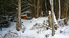 Un piège ? (ETt_) Tags: scrap metal forest dark evil horror scary trees pintrees winter snow car abandonned trap