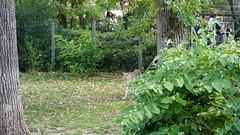 2018-09-07_15-03-26_ILCE-6500_DSC01612 (Miguel Discart Photos Vrac 3) Tags: 132mm 2018 animal animalphotography animals animalsupclose animaux belgie belgique belgium botanicalgarden brugelette e18135mmf3556oss focallength132mm focallengthin35mmformat132mm ilce6500 iso320 jardinbontanique nature naturephotography pairidaiza paradisio pet sony sonyilce6500 sonyilce6500e18135mmf3556oss zoo