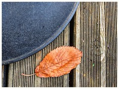 Squaring the Circle of the Seasons. (Mikec77) Tags: autumn arty leaf textures