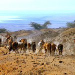 Competition: 18/09/2018 - PDI. League 1. Open. 02 Masai herdsman, Tanzania Bill Wastell by Bill Wastell
