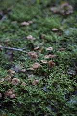 reference-115 (TLCStudentReferences) Tags: helenastackhouse lichen moss tree leaves fun bokeh nz