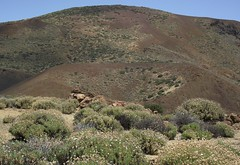 Teide national park tenerife (patrick555666751 THANKS FOR 5 000 000 VIEWS) Tags: teide national park parco nacional del du pierre piedra stone rock roc roche roca volcan volcano volcanique volcanology montagne mountain muntanya canaries canarias canary islas iles ilhas isola islands europe europa espana spain espagne atlantic atlantique atlantico patrick55566675 caldera caldeira crater cratere roque montana parc tenerife island macaronesia kanarische inseln spanien