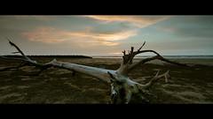 荒 (crazytony55) Tags: d90 nikon desolate deadwood beach sea sunset chiayi taiwan haomei 好美里 枯木 海邊 台灣 嘉義 雲彩