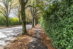 CENTER PARK ROAD [27 TREES FELLED BY STORM OPHELIA LATE LAST YEAR]-144481 (infomatique) Tags: centerparkroad racecourse felledtrees stormophelia uk ireland hurricaneophelia cork williammurphy infomatique fotonique sony a7riii 2470mmgmlens trees nicewalk beautifulday