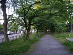 A morning park (しまむー) Tags: panasonic lumix dmcgx1 gx1 g 20mm f17 asph trip train yuri highland railway 由利高原鉄道
