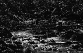 Where Only The Stream Murmurs ...
