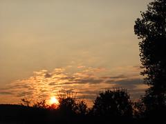 IMG_6664 (germancute) Tags: pflanze outdoor ilmkreis landscape landschaft thuringia thüringen germany germancute deutschland