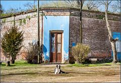 Esquina (Totugj) Tags: nikon d7500 nikkor 18140mm esquina gouin carmen de areco provincia buenos aires perro pueblo interior campo