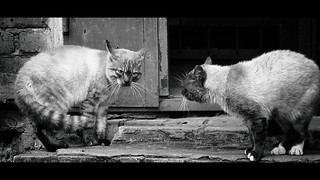 Fight Cats