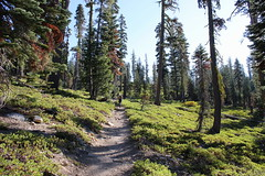 The trail climbed steadily for the first mile or so (rozoneill) Tags: lassen volcanic national park california hiking twin lakes upper lower cluster pacific crest trail peak echo lake