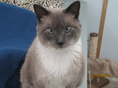 Justice - 4 year old neutered male