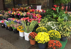 Rainy Day Cheer (FernShade) Tags: vancouverbc westend denmanstreet flowermarket flowers flora blooms bouquets plants